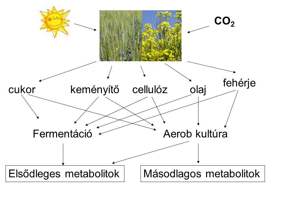 CO 2 cukorkeményítőcellulózolaj FermentációAerob kultúra Elsődleges metabolitokMásodlagos metabolitok fehérje