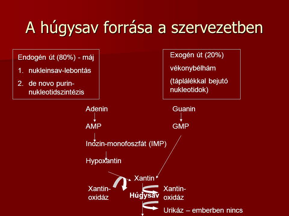 A húgysav forrása a szervezetben Endogén út (80%) - máj 1.nukleinsav-lebontás 2.de novo purin- nukleotidszintézis Exogén út (20%) vékonybélhám (táplál