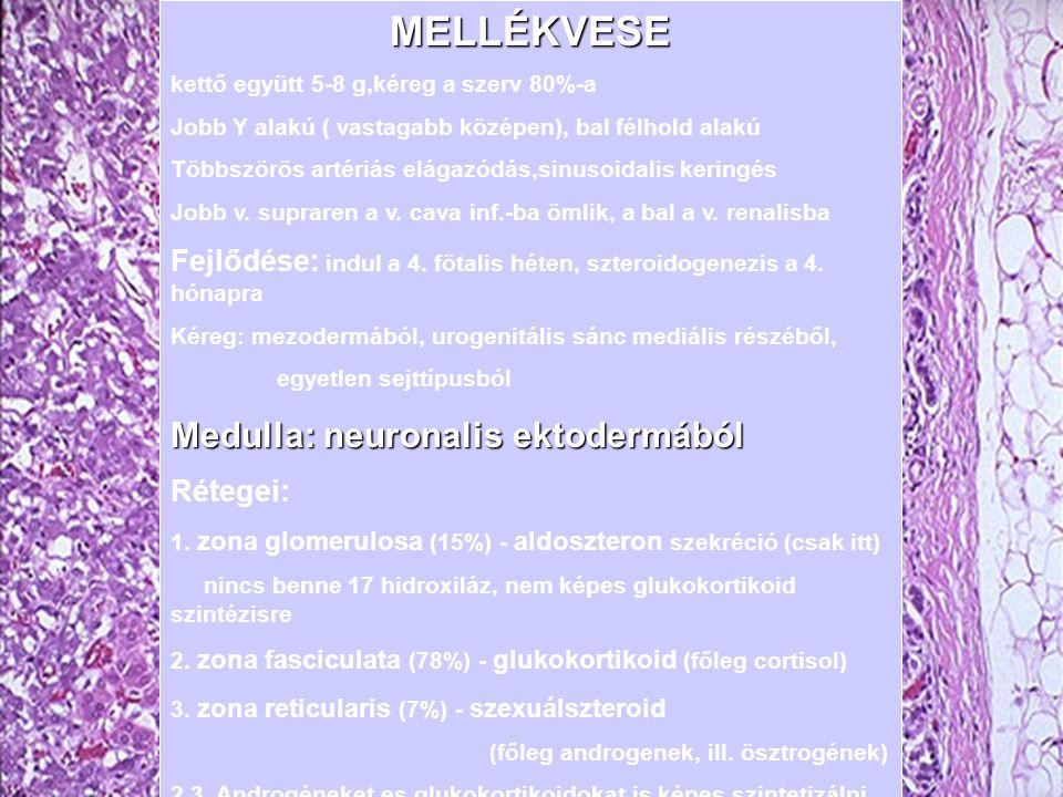 MEN2 tünetek és kezelés 1.Medullaris pajzsmirigycarcinoma -parafoll.
