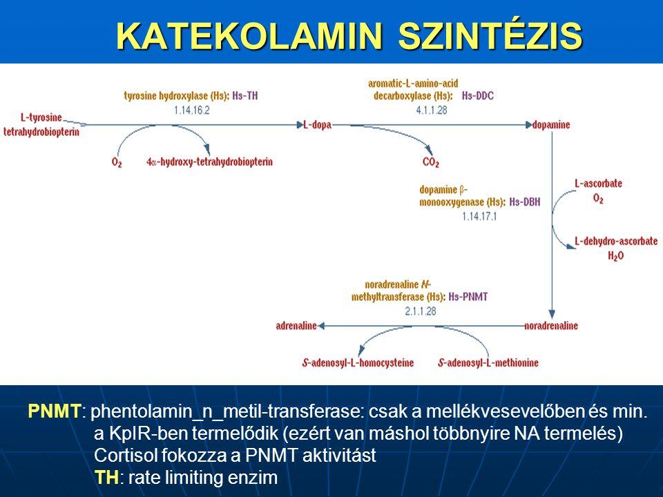 KATEKOLAMIN SZINTÉZIS PNMT: phentolamin_n_metil-transferase: csak a mellékvesevelőben és min.