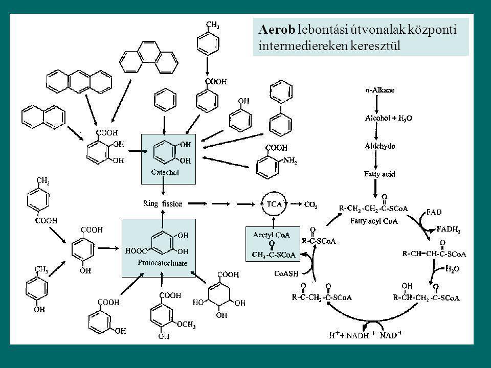 Aerob lebontási folyamatokban a fő szerepet az oxigenázok játszák Alkánok, aromás vegyületek oxidációját katalizálják, melynek eredménye alkoholok, aldehidek, epoxidok, karboxilsavak Ipari-, környezeti- biotechnológiai jelentőség