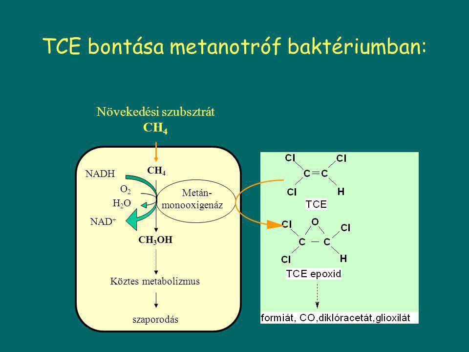  Hosszúláncú klórozott alkánok - plaszticizálóként haszn.festékekben, gumiban, műanyagokban - oxidatív reakcióval támadható - széles spektrumú alkán monooxigenáz enzimet szintetizáló baktériummal, melynek érdekessége, hogy a klórozott szubsztráttal indukálható az enzim