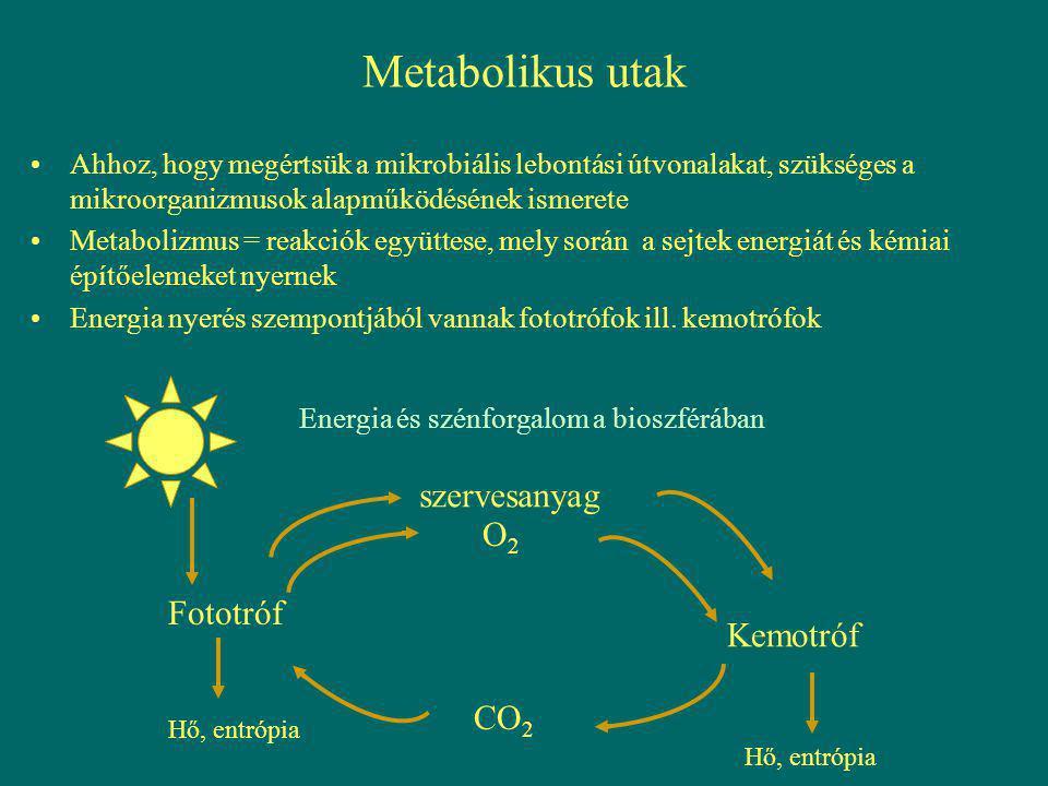 Számos metabolikus út Szükséges elemek, vegyületek felvétele a környezetből (membrán transzport)glükózzal könnyen megy: glükóz prekurzoroképítőelemek PO 4 3 - NH 4 + SO 4 2 - PO 4 3 - NH 4 + SO 4 2 - fehérjék sejtfal nukleinsavak glükogén Makromolekulák Oligomerek Monomerek felvétel sejtbemetabolizmus Depolimerizáló enzimek hidrolizis O2O2