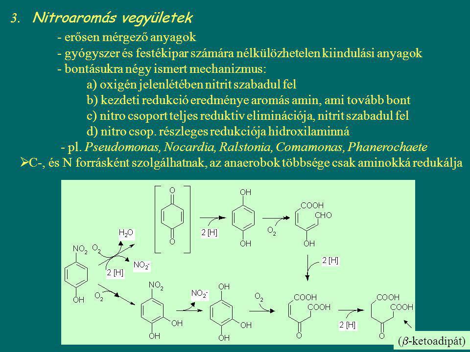 TNT reduktív mikrobiális transzformációja Gyengén vízoldékony, toxikus, ellenáll az oxigenolitikus támadásnak Mikrobiális bontására konkrét bizonyíték nincs, de Pseudomonas savastanoi faj TNT denitrációt mutatott, de szaporodást nem tapasztaltak, azaz nem szénforrás anaerob körülm.