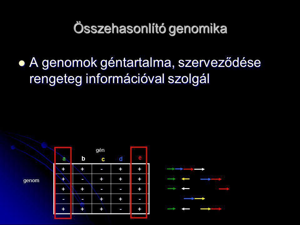 Heurisztikus többszörös rendezők (Multiple alignment) ClustalW, clustalv, clustalx (PC) (Thompson, Higgins, Gibson 1994) ClustalW, clustalv, clustalx (PC) (Thompson, Higgins, Gibson 1994) A szekvenciákból páronként távolságokat számít A távolságok alapján filogenetikai törzsfát (vezérfát) készít.