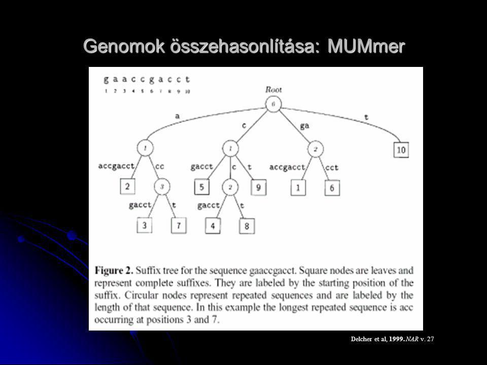 A HMM hiányossága csak Az átmeneti- és kibocsátási valószínűségek csak az aktuális fázis függvényei Emiatt távoli összefüggésekkel kapcsolatban nem használható RNS másodlagos szerkezet korrelált mutáció, pl.