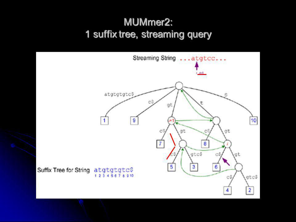 MUMmer2: 1 suffix tree, streaming query