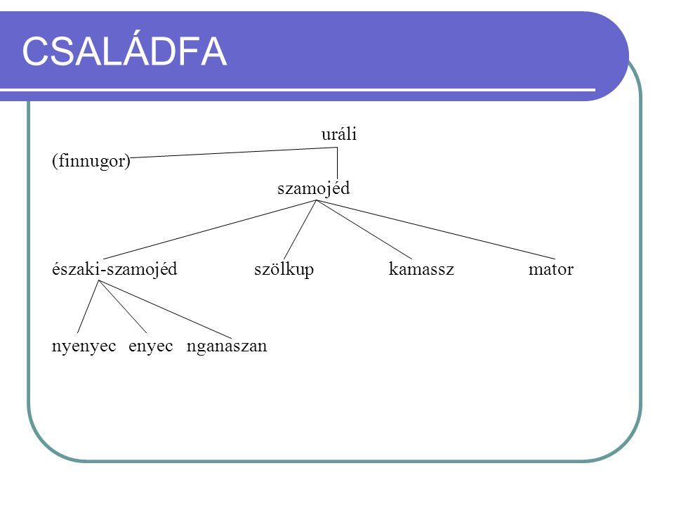 CSALÁDFA uráli (finnugor) szamojéd északi-szamojédszölkupkamassz mator nyenyec enyecnganaszan