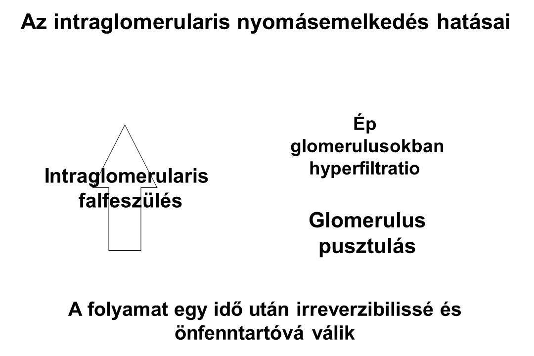 Na- és víz retentio Magas vérnyomás Glomerulosclerosis Működő veseszövet A glomerulosclerosis konzekvenciái (Lombard 1989) Perifériás rezisztencia Volumen- expansio Megnövekedett perctérfogat