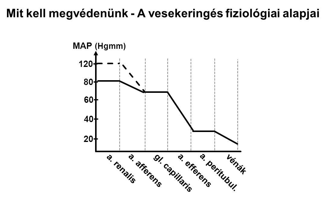 Izommunka Vascularis resistentia RBF (BP) Nyugalmi vérátáramlás (RBF): 1200 ml/min A perctérfogat 22% -a Az oxigénfogyasztás 18 ml/min - 7% A veseerek basalis- és vasoconstrictor tónusa egyike a legalacsonyabbaknak Mit kell megvédenünk - A vesekeringés fiziológiai alapjai