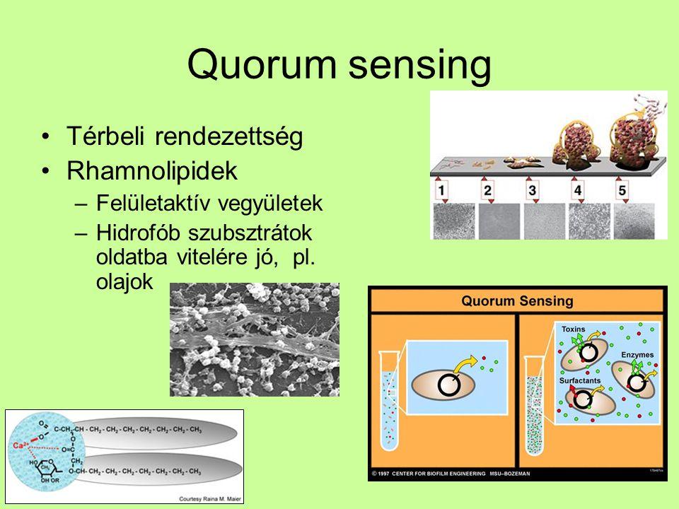 Quorum sensing Térbeli rendezettség Rhamnolipidek –Felületaktív vegyületek –Hidrofób szubsztrátok oldatba vitelére jó, pl. olajok