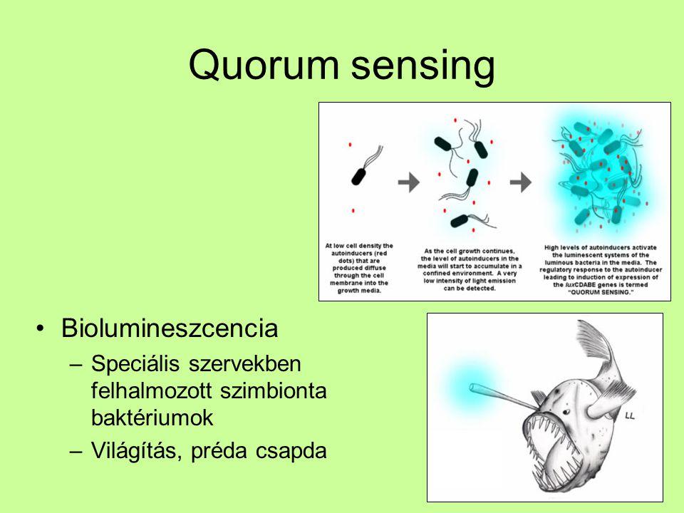 Quorum sensing Biolumineszcencia –Speciális szervekben felhalmozott szimbionta baktériumok –Világítás, préda csapda
