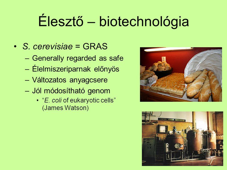 """Élesztő – biotechnológia S. cerevisiae = GRAS –Generally regarded as safe –Élelmiszeriparnak előnyös –Változatos anyagcsere –Jól módosítható genom """"E."""