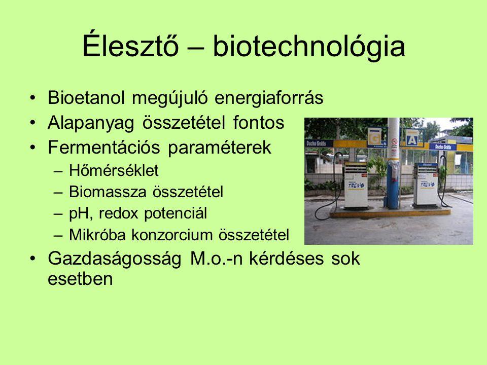 Élesztő – biotechnológia Bioetanol megújuló energiaforrás Alapanyag összetétel fontos Fermentációs paraméterek –Hőmérséklet –Biomassza összetétel –pH,