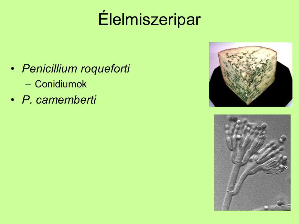 Élelmiszeripar Penicillium roqueforti –Conidiumok P. camemberti