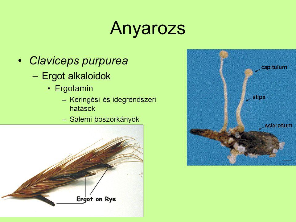 Anyarozs Claviceps purpurea –Ergot alkaloidok Ergotamin –Keringési és idegrendszeri hatások –Salemi boszorkányok