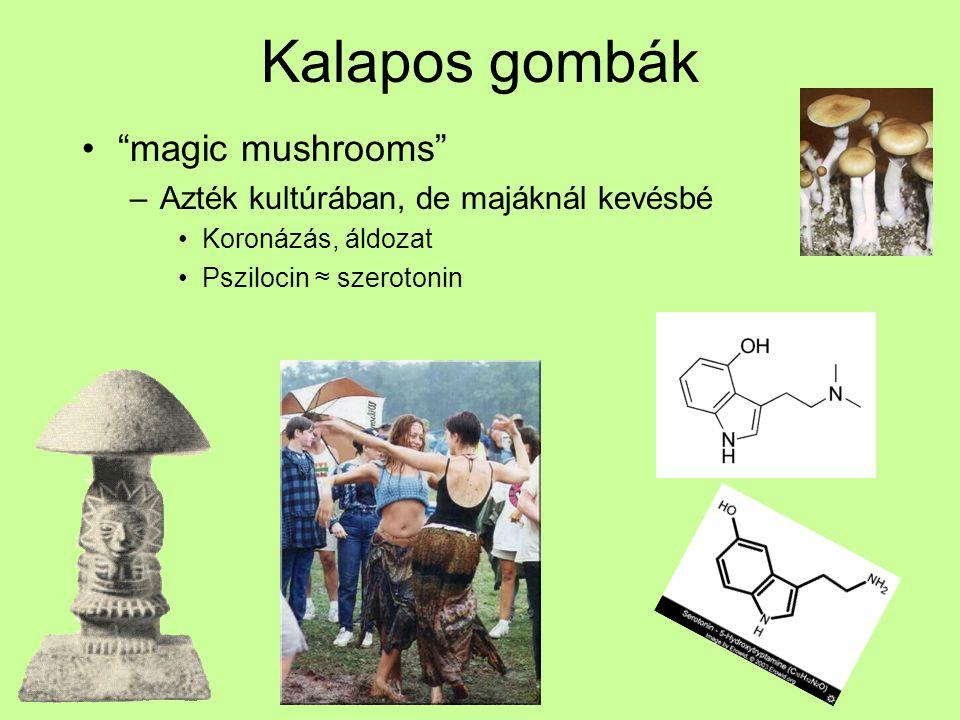 """Kalapos gombák """"magic mushrooms"""" –Azték kultúrában, de majáknál kevésbé Koronázás, áldozat Pszilocin ≈ szerotonin"""