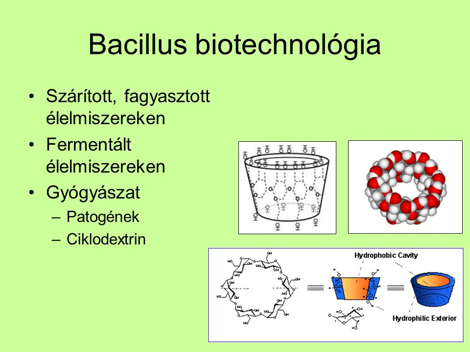 Bacillus biotechnológia Enzimek –Proteázok, lipázok –Celluláz, amiláz B. subtilis – EtOH gyártáshoz