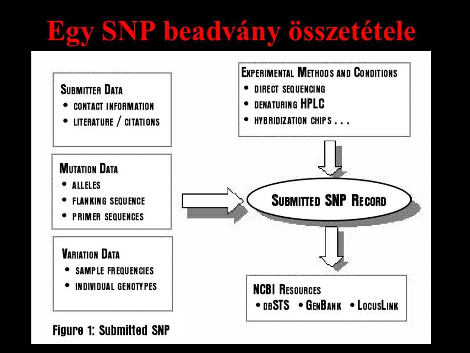 Egy SNP beadvány összetétele