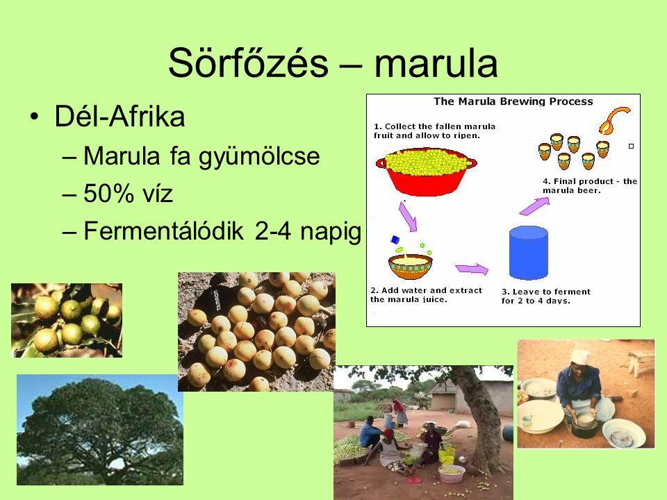 Sörfőzés – marula Dél-Afrika –Marula fa gyümölcse –50% víz –Fermentálódik 2-4 napig