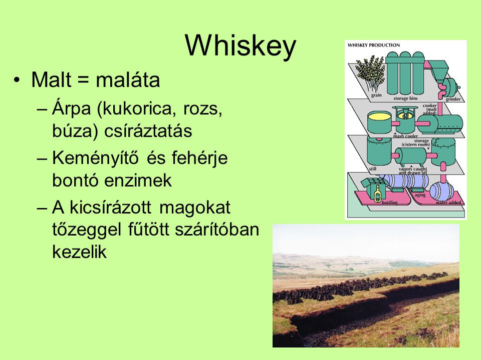 Whiskey Malt = maláta –Árpa (kukorica, rozs, búza) csíráztatás –Keményítő és fehérje bontó enzimek –A kicsírázott magokat tőzeggel fűtött szárítóban k