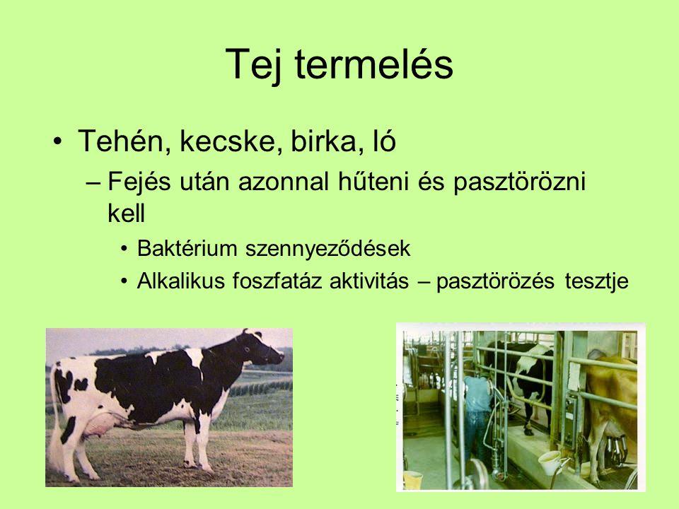 Tej termelés Tehén, kecske, birka, ló –Fejés után azonnal hűteni és pasztörözni kell Baktérium szennyeződések Alkalikus foszfatáz aktivitás – pasztörö