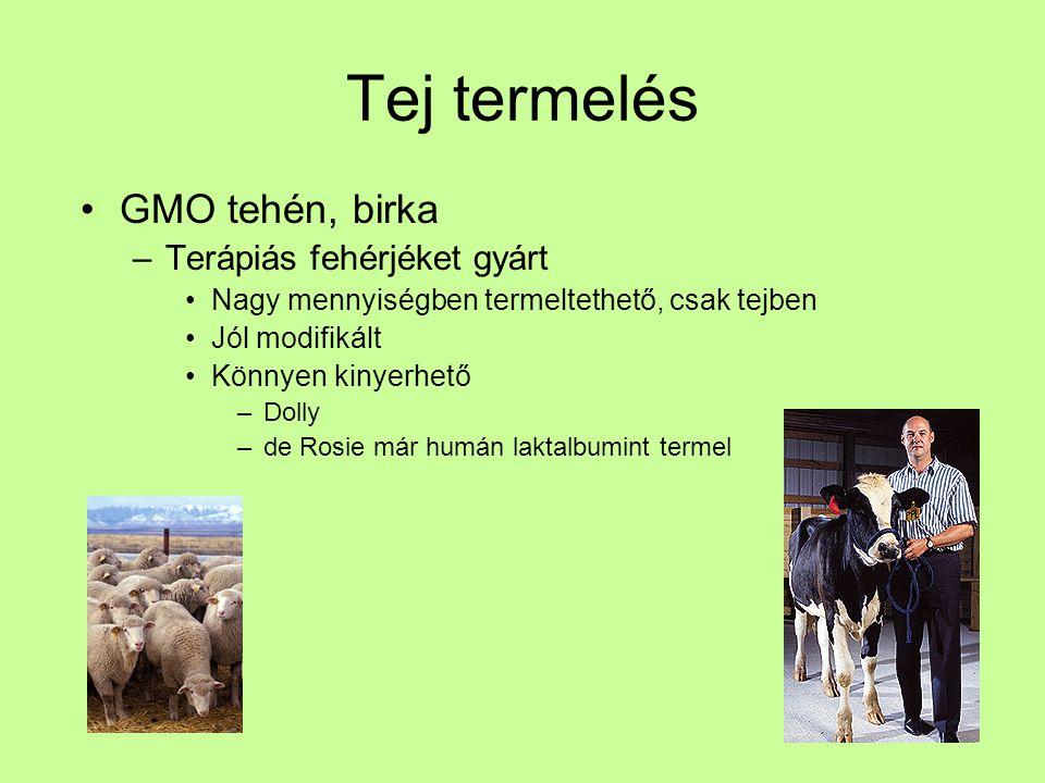Tej termelés GMO tehén, birka –Terápiás fehérjéket gyárt Nagy mennyiségben termeltethető, csak tejben Jól modifikált Könnyen kinyerhető –Dolly –de Ros