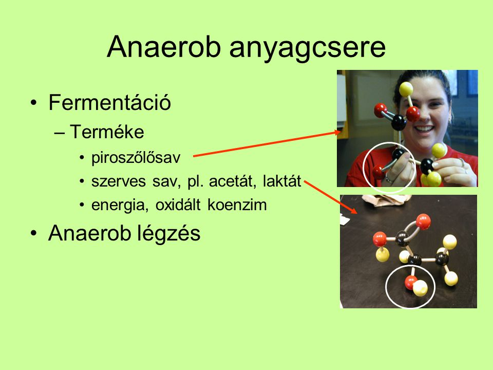 Anaerob anyagcsere Fermentáció –Terméke piroszőlősav szerves sav, pl.