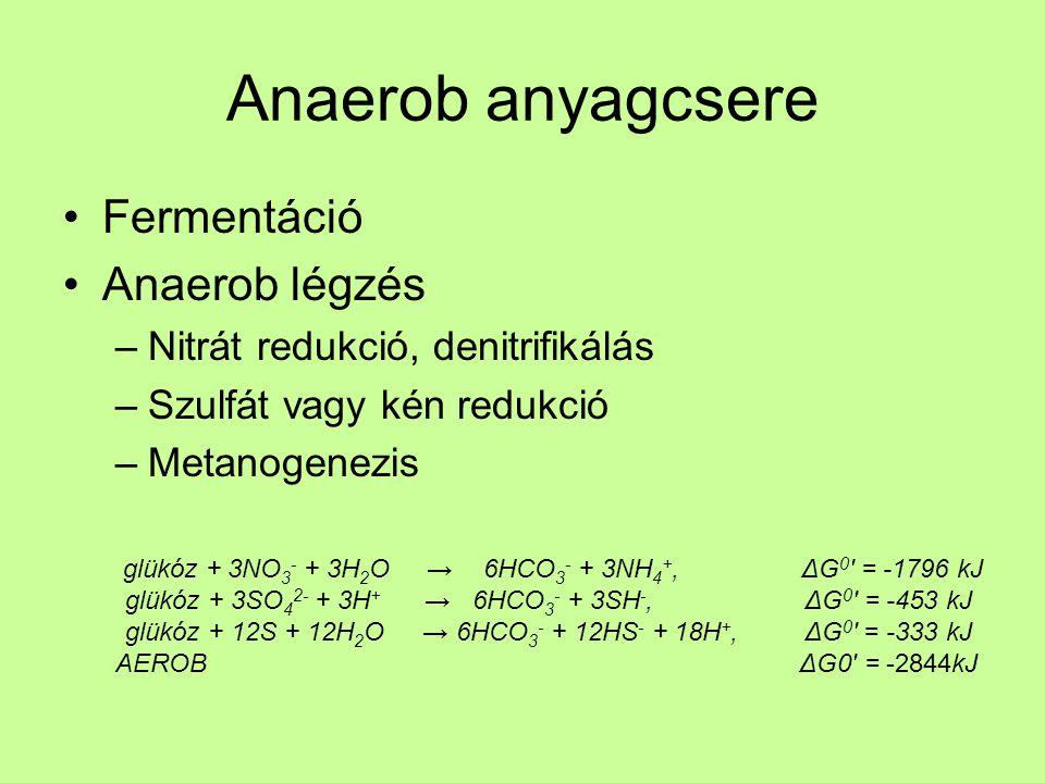 Anaerob anyagcsere Fermentáció Anaerob légzés –Nitrát redukció, denitrifikálás –Szulfát vagy kén redukció –Metanogenezis glükóz + 3NO 3 - + 3H 2 O → 6HCO 3 - + 3NH 4 +, ΔG 0 = -1796 kJ glükóz + 3SO 4 2- + 3H + → 6HCO 3 - + 3SH -, ΔG 0 = -453 kJ glükóz + 12S + 12H 2 O → 6HCO 3 - + 12HS - + 18H +, ΔG 0 = -333 kJ AEROB ΔG0 = -2844kJ