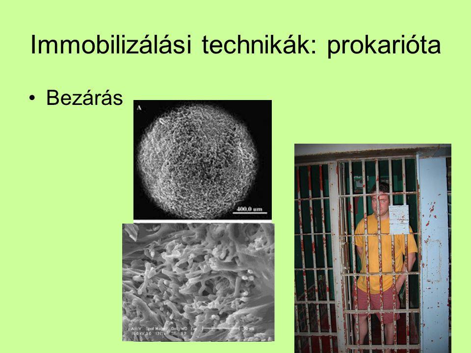 Immobilizálási technikák: prokarióta Bezárás