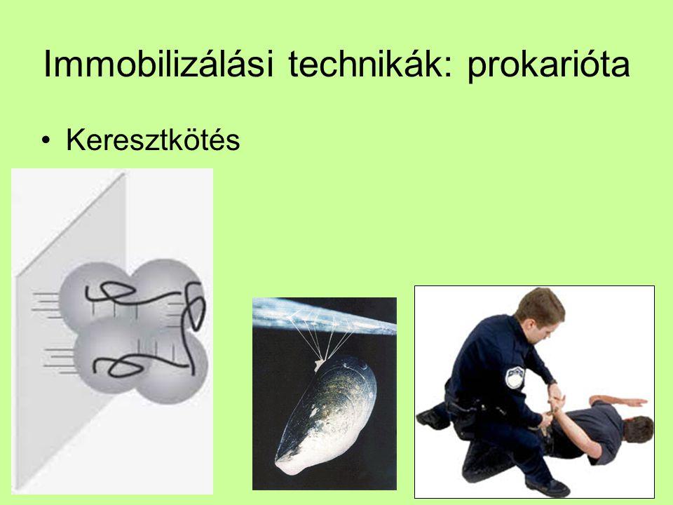 Immobilizálási technikák: prokarióta Keresztkötés