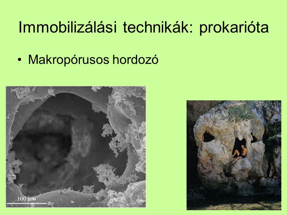 Immobilizálási technikák: prokarióta Makropórusos hordozó