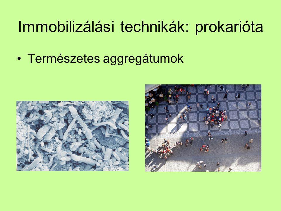 Immobilizálási technikák: prokarióta Természetes aggregátumok