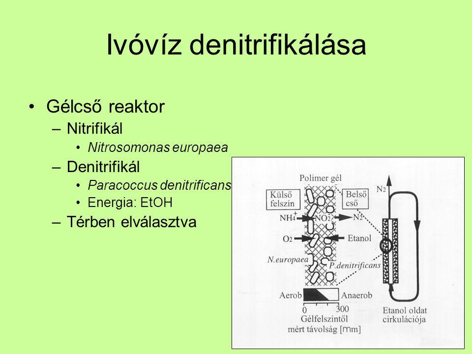 Ivóvíz denitrifikálása Gélcső reaktor –Nitrifikál Nitrosomonas europaea –Denitrifikál Paracoccus denitrificans Energia: EtOH –Térben elválasztva