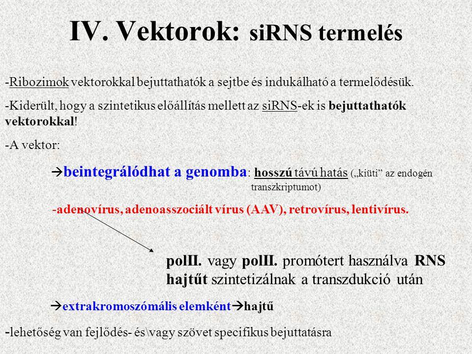 IV. Vektorok: siRNS termelés -Ribozimok vektorokkal bejuttathatók a sejtbe és indukálható a termelődésük. -Kiderült, hogy a szintetikus előállítás mel