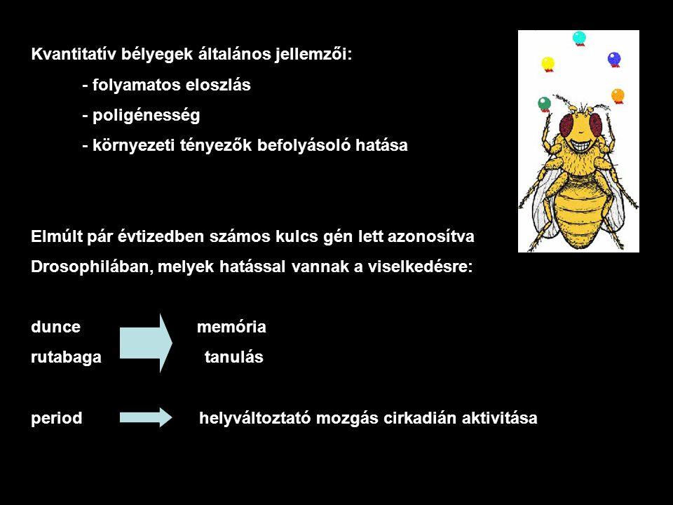 Különböző tesztek a Drosophila viselkedésének vizsgálatára udvarlási viselkedés: - udvarlási látenciaidő - közösülési látenciaidő