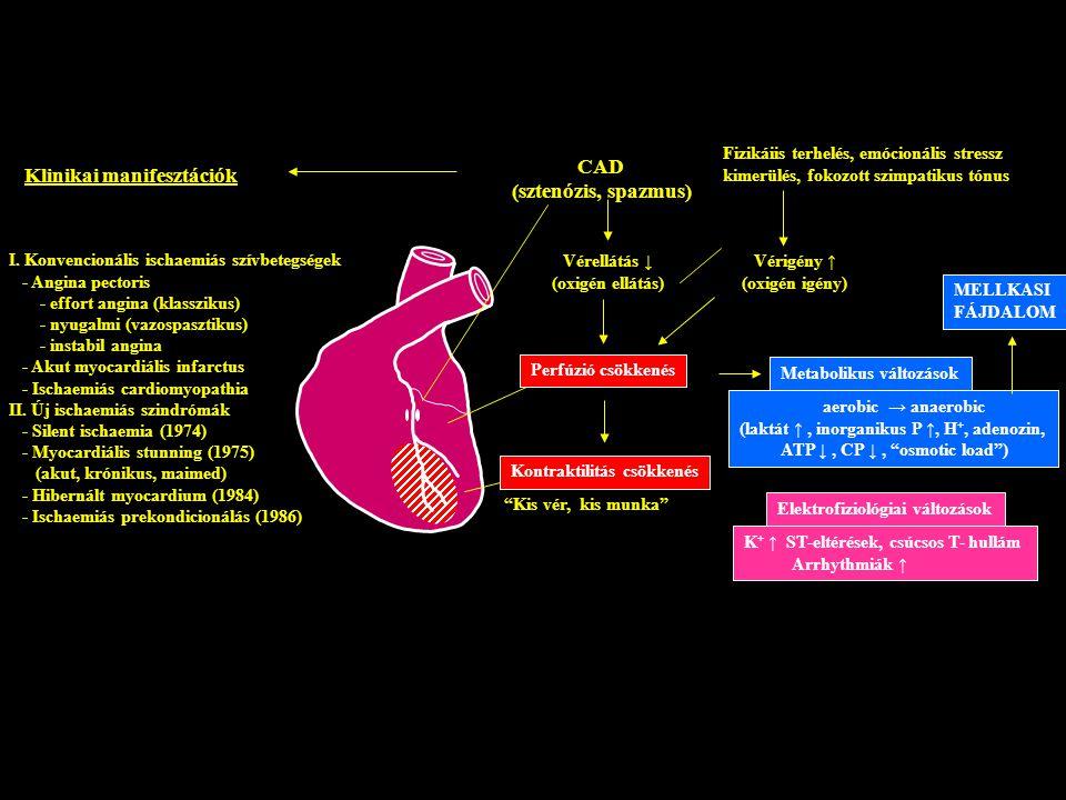 """CAD (sztenózis, spazmus) Vérellátás ↓ (oxigén ellátás) Perfúzió csökkenés """"Kis vér, kis munka"""" Kontraktilitás csökkenés Metabolikus változások aerobic"""