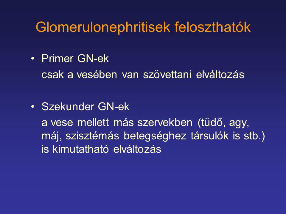 Glomerulonephritisek feloszthatók Primer GN-ek csak a vesében van szövettani elváltozás Szekunder GN-ek a vese mellett más szervekben (tüdő, agy, máj,