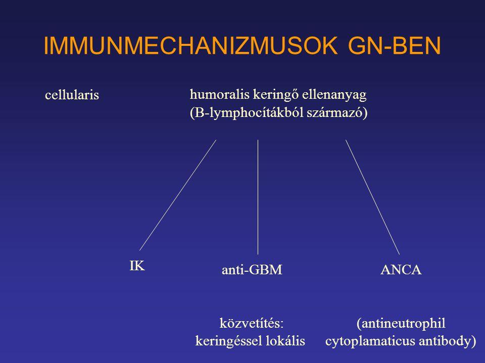 IMMUNMECHANIZMUSOK GN-BEN humoralis keringő ellenanyag (B-lymphocítákból származó) anti-GBM közvetítés: keringéssel lokális IK ANCA (antineutrophil cy