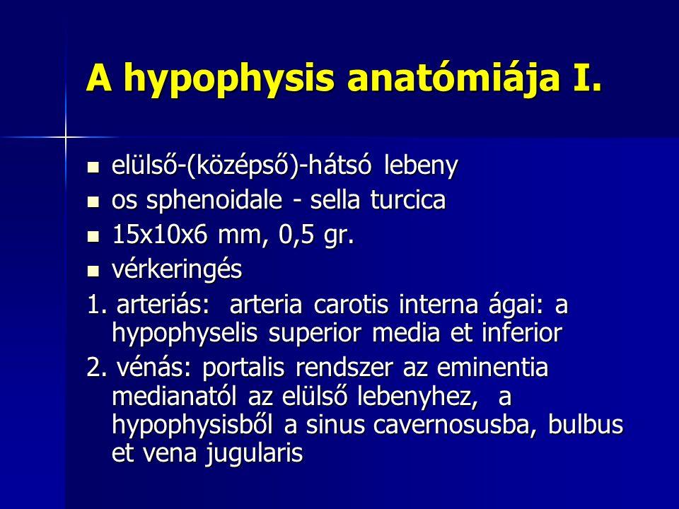 A hypophysis anatómiája I. elülső-(középső)-hátsó lebeny elülső-(középső)-hátsó lebeny os sphenoidale - sella turcica os sphenoidale - sella turcica 1