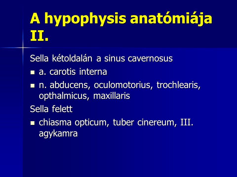 A hypophysis anatómiája II. Sella kétoldalán a sinus cavernosus a. carotis interna a. carotis interna n. abducens, oculomotorius, trochlearis, opthalm