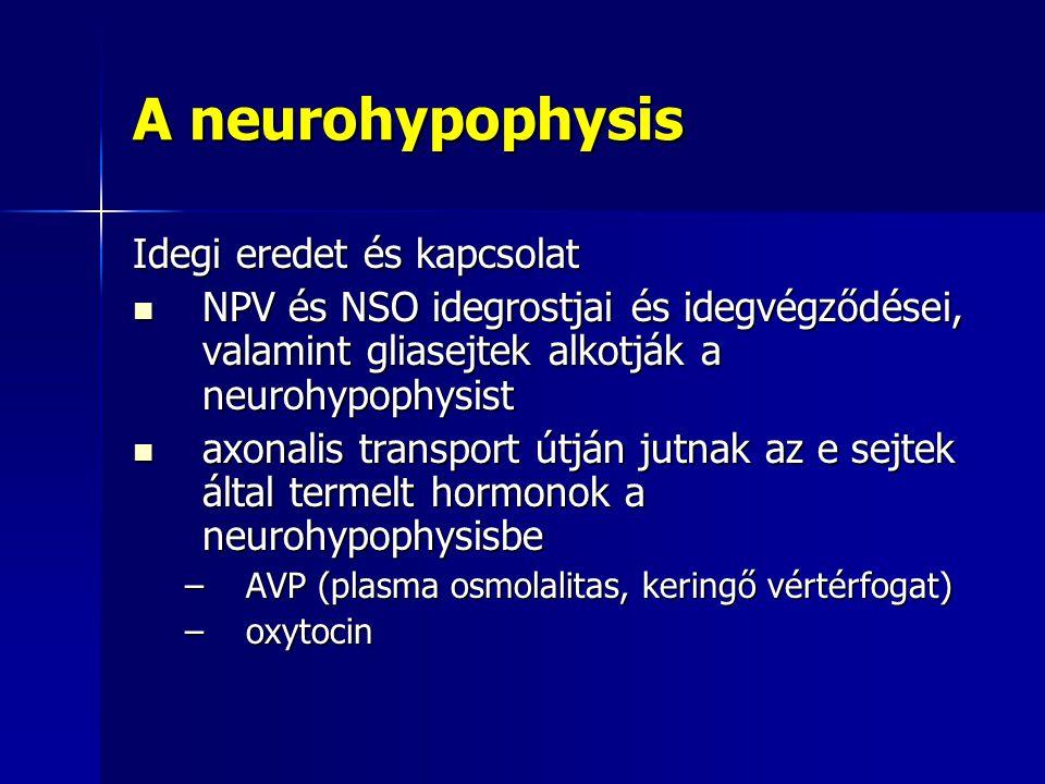 A neurohypophysis Idegi eredet és kapcsolat NPV és NSO idegrostjai és idegvégződései, valamint gliasejtek alkotják a neurohypophysist NPV és NSO idegr