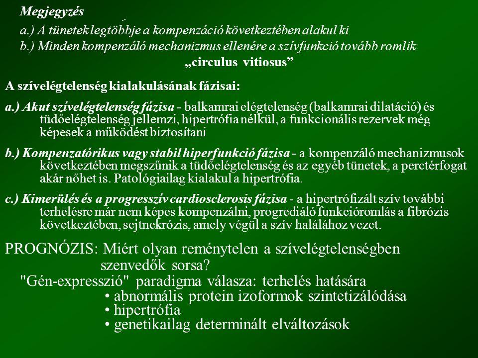 """Megjegyzés a.) A tünetek legtöbbje a kompenzáció következtében alakul ki b.) Minden kompenzáló mechanizmus ellenére a szívfunkció tovább romlik """"circulus vitiosus A szívelégtelenség kialakulásának fázisai: a.) Akut szívelégtelenség fázisa - balkamrai elégtelenség (balkamrai dilatáció) és tüdőelégtelenség jellemzi, hipertrófia nélkül, a funkcionális rezervek még képesek a működést biztosítani b.) Kompenzatórikus vagy stabil hiperfunkció fázisa - a kompenzáló mechanizmusok következtében megszűnik a tüdőelégtelenség és az egyéb tünetek, a perctérfogat akár nőhet is."""