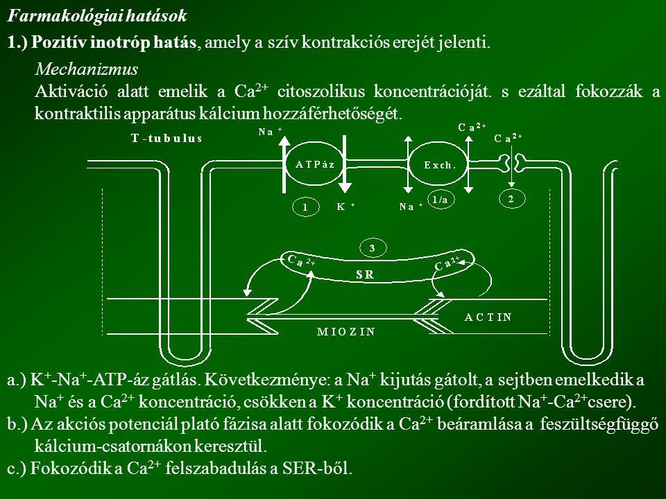 Farmakológiai hatások 1.) Pozitív inotróp hatás, amely a szív kontrakciós erejét jelenti. Mechanizmus Aktiváció alatt emelik a Ca 2+ citoszolikus konc