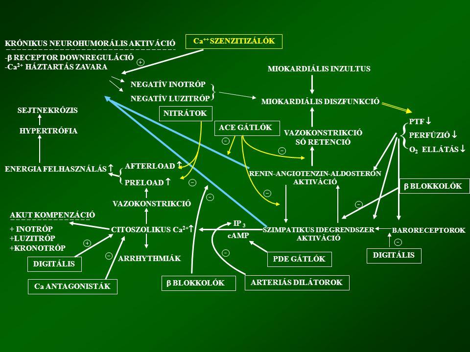 KRÓNIKUS NEUROHUMORÁLIS AKTIVÁCIÓ -  RECEPTOR DOWNREGULÁCIÓ -Ca 2+ HÁZTARTÁS ZAVARA NEGATÍV INOTRÓP NEGATÍV LUZITRÓP MIOKARDIÁLIS INZULTUS MIOKARDIÁL