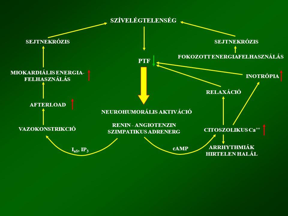SZÍVELÉGTELENSÉG SEJTNEKRÓZIS MIOKARDIÁLIS ENERGIA- FELHASZNÁLÁS AFTERLOAD VAZOKONSTRIKCIÓ PTF NEUROHUMORÁLIS AKTIVÁCIÓ RENIN - ANGIOTENZIN SZIMPATIKUS ADRENERG FOKOZOTT ENERGIAFELHASZNÁLÁS RELAXÁCIÓ INOTRÓPIA CITOSZOLIKUS Ca ++ ARRHYTHMIÁK HIRTELEN HALÁL I nS, IP 3 cAMP