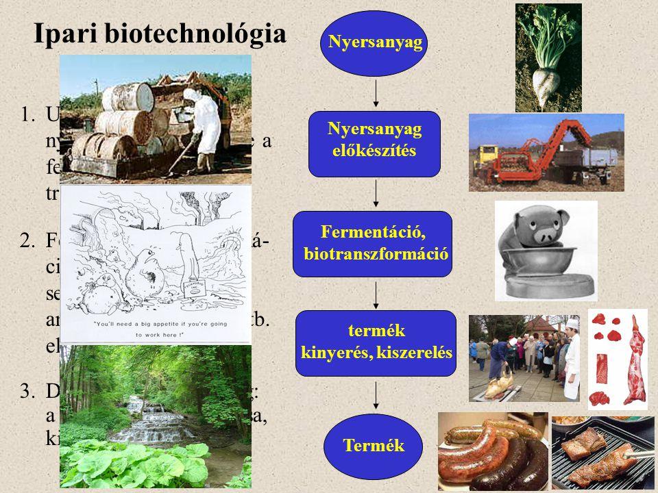 Ipari biotechnológia kulcslépései 3.Downstream processing: a kívánt termék tisztítása, kiszerelése Nyersanyag előkészítés Fermentáció, biotranszformác