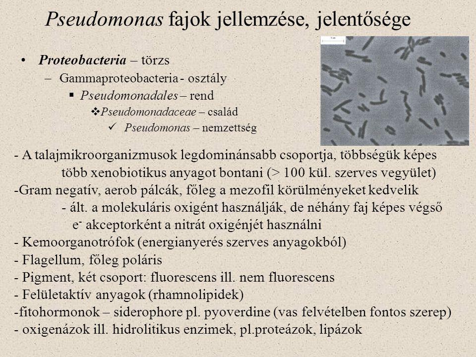 Pseudomonas fajok jellemzése, jelentősége Proteobacteria – törzs –Gammaproteobacteria - osztály  Pseudomonadales – rend  Pseudomonadaceae – család P