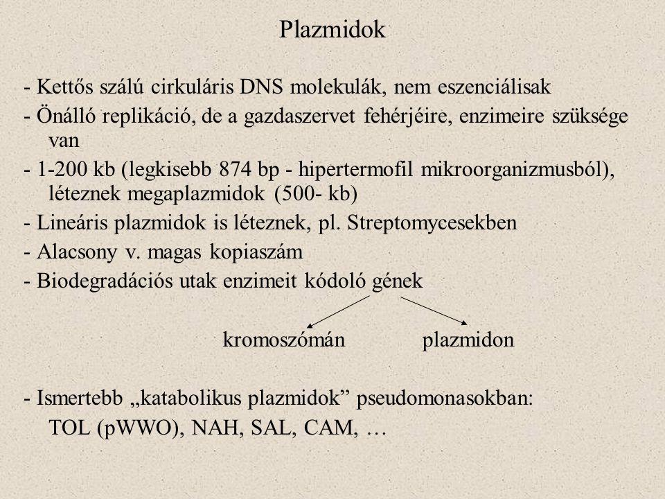 Plazmidok - Kettős szálú cirkuláris DNS molekulák, nem eszenciálisak - Önálló replikáció, de a gazdaszervet fehérjéire, enzimeire szüksége van - 1-200