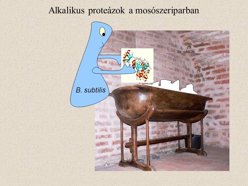 B. subtilis Alkalikus proteázok a mosószeriparban